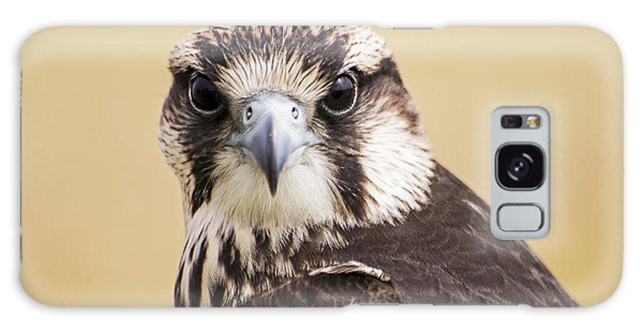 Bird Galaxy S8 Case featuring the photograph Lanner Falcon by Thomas Morris