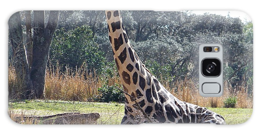 Giraffe Galaxy S8 Case featuring the photograph Large Giraffe by Carol Bradley
