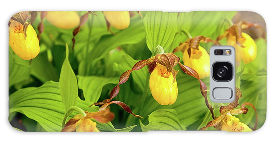 Acadia National Park Galaxy S8 Case featuring the photograph Large Yellow Lady's Slipper by Susan Cole Kelly
