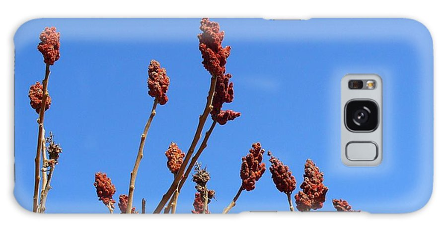 Sky Galaxy S8 Case featuring the photograph Last Year's Sumac by Peggy King