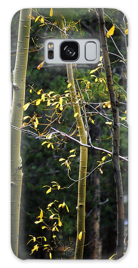 Aspen Galaxy Case featuring the photograph Late Aspen by Jerry McElroy