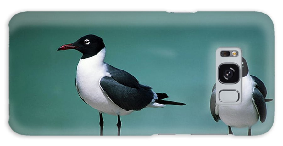 2 Laughing Gulls Galaxy S8 Case featuring the photograph Laughing Gulls by Sally Weigand