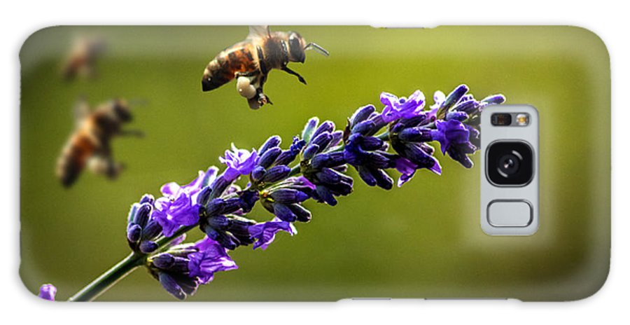 Bee Galaxy S8 Case featuring the photograph Lavender by Martin Newman