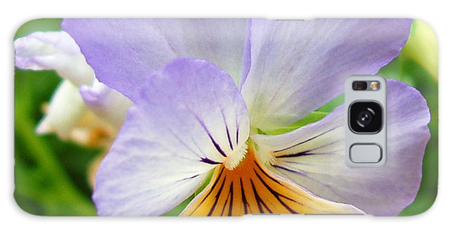 Pansy Galaxy S8 Case featuring the photograph Lavender Pansy by Nancy Mueller