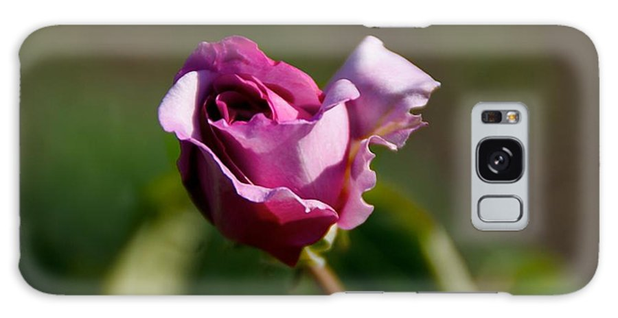 Flower Galaxy Case featuring the photograph Lavender Rose by Toni Berry