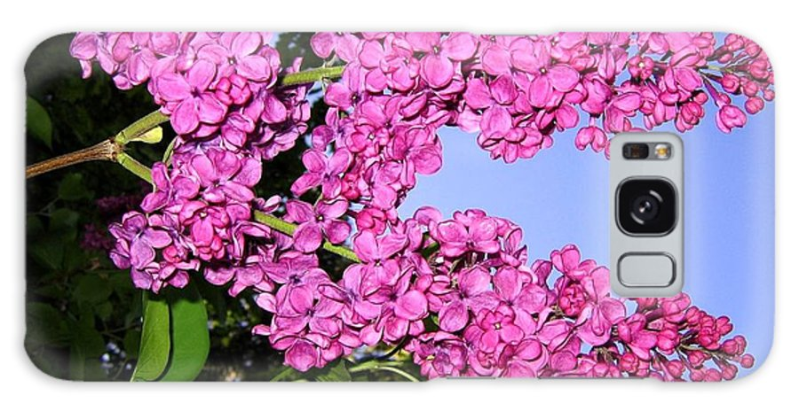 Lilacs Galaxy S8 Case featuring the photograph Lavish Lilacs by Will Borden