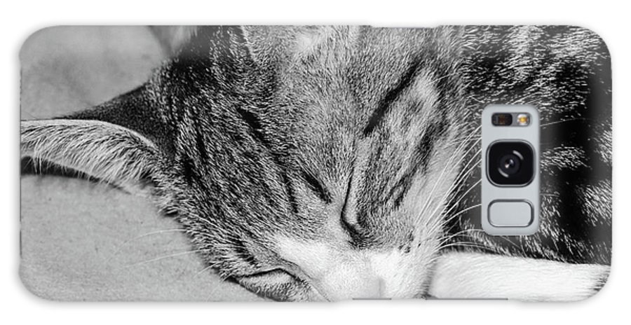 Animal Galaxy S8 Case featuring the photograph Lea Sleepy Cat by Nenad Isakovic