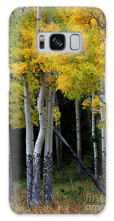 Aspens Galaxy Case featuring the photograph Leaning Aspen by Timothy Johnson