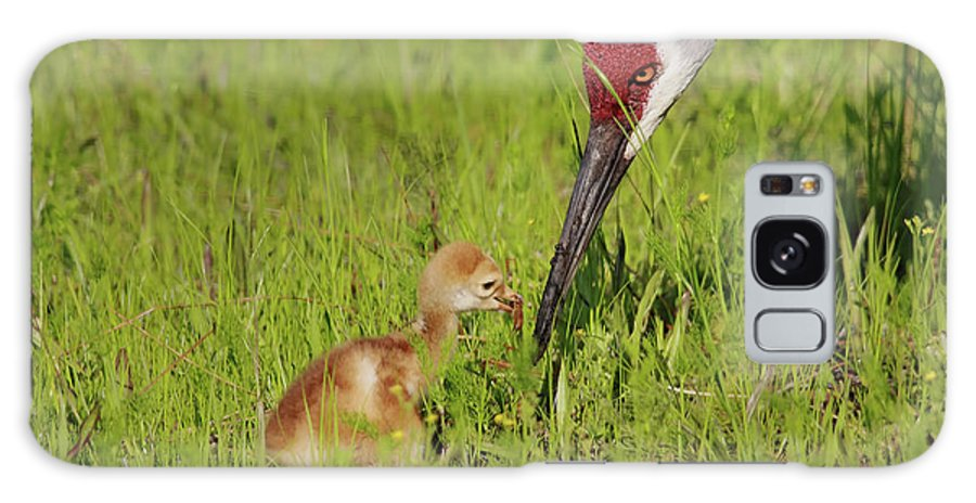 Sandhill Crane Galaxy S8 Case featuring the photograph Learning To Eat by Deborah Benoit