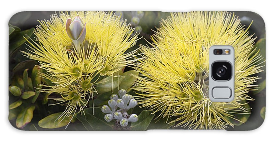 Bloom Galaxy S8 Case featuring the photograph Lehua Mamo Blossom by Greg Vaughn - Printscapes