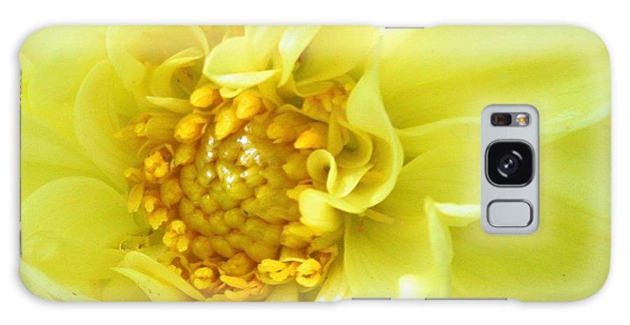 Flowers Galaxy S8 Case featuring the photograph Lemon Dream by Lori Pessin Lafargue