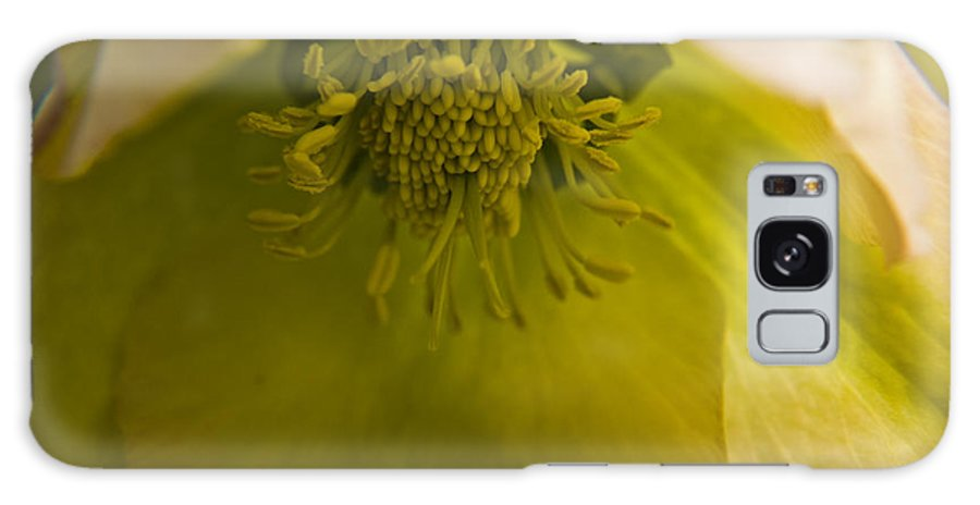 Flower Galaxy S8 Case featuring the photograph Lenten Rose Interior by Teresa Mucha