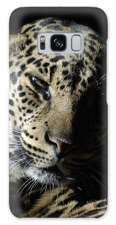 Leopard Galaxy S8 Case featuring the photograph Leopard II by Keith Lovejoy