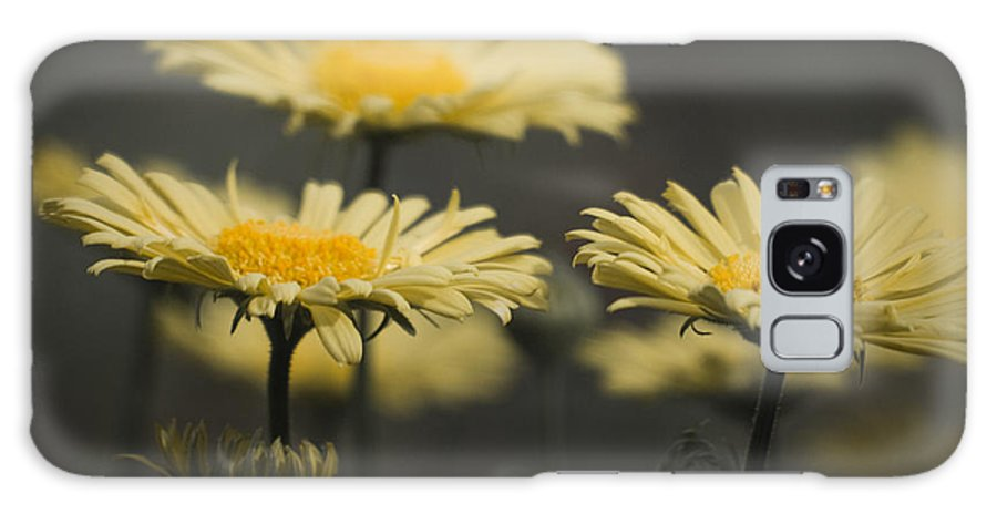 Leopards Galaxy S8 Case featuring the photograph Leopards Bane Desaturated by Teresa Mucha