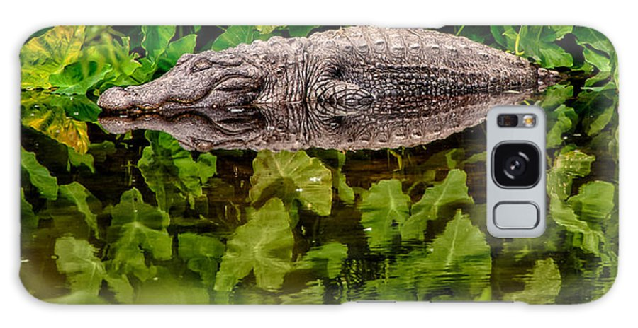 Alligator Galaxy Case featuring the photograph Let Sleeping Gators Lie by Christopher Holmes