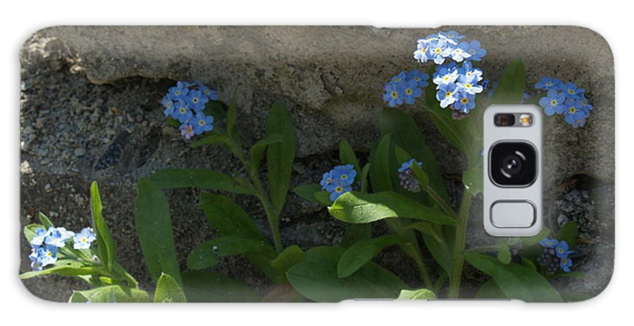 Forget-me-nots Galaxy S8 Case featuring the photograph Life Will Prevail by Anna Lisa Yoder