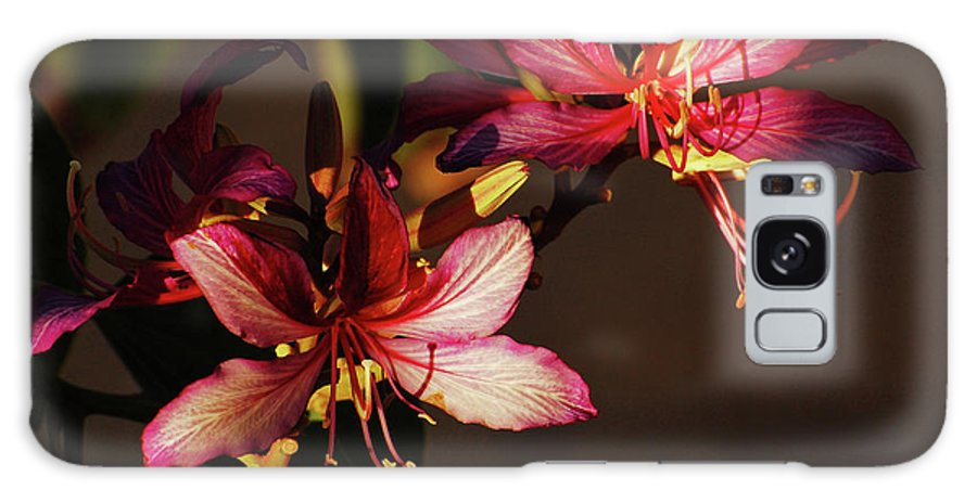 Orchid Tree Galaxy S8 Case featuring the photograph Light And Shadow Play by Jean Booth