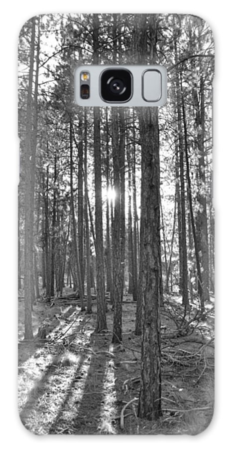 Trees Galaxy S8 Case featuring the photograph Light Up The Pine by Noah Cole