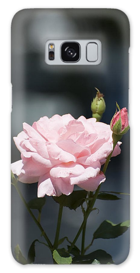 Rose Galaxy S8 Case featuring the photograph Like A Rose by Adrian Bud