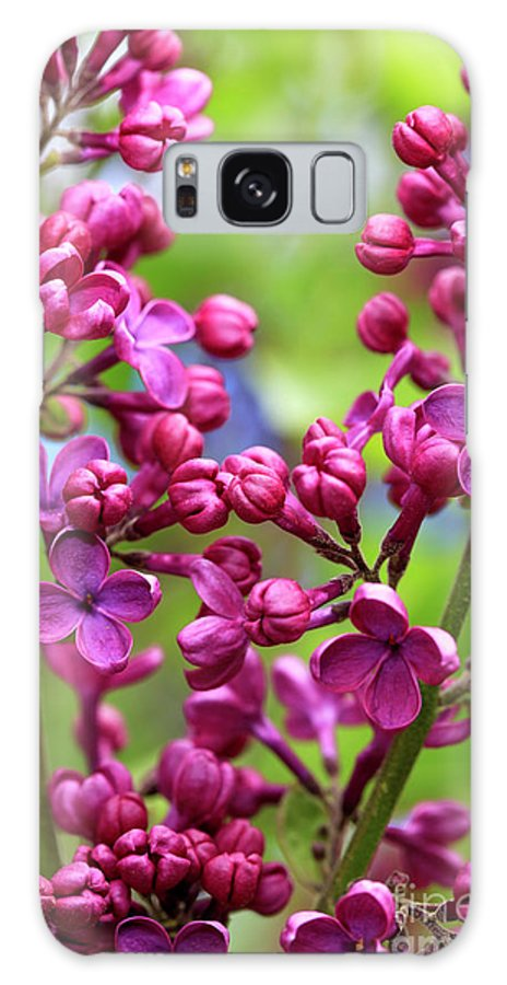 Lilacs Galaxy S8 Case featuring the photograph Lilacs by John Rizzuto