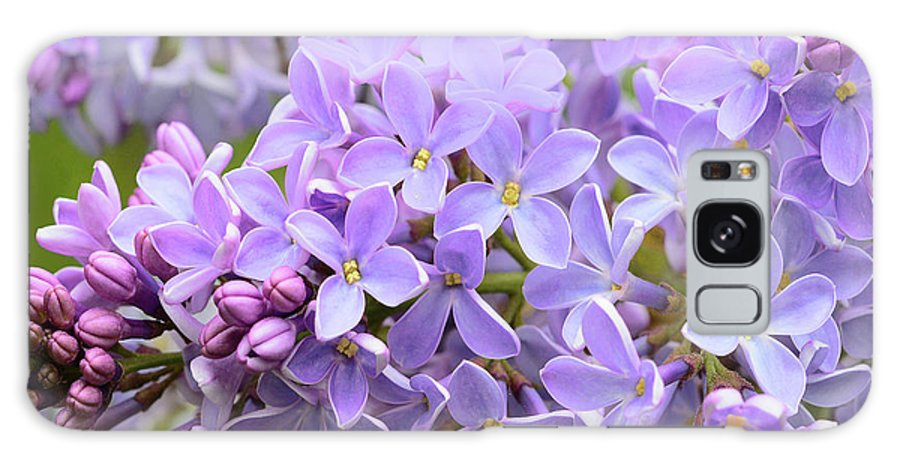 Lilacs Galaxy S8 Case featuring the photograph Lilacs-lavender Lovely by Regina Geoghan