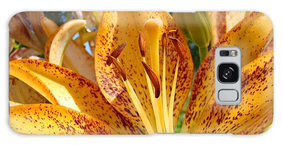 Lilies Galaxy S8 Case featuring the photograph Lilies Art Prints Orange Lily Flowers 2 Gilcee Prints Baslee Troutman by Baslee Troutman