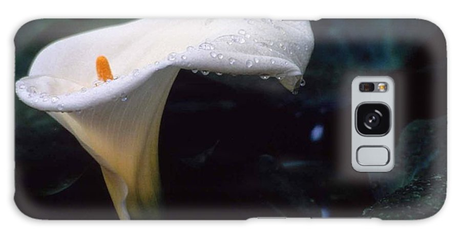 Lilly Galaxy S8 Case featuring the photograph Lilly Of The Tears by Laurie Paci