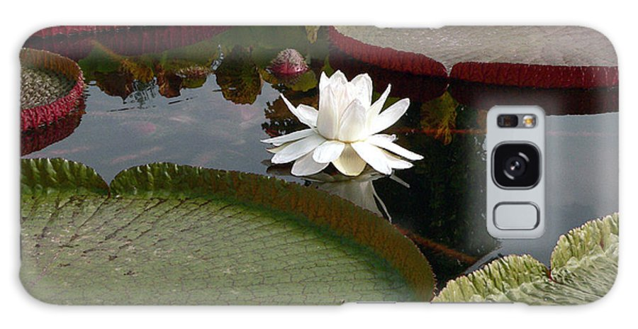 Water Lily Galaxy S8 Case featuring the photograph Lily by David Bearden