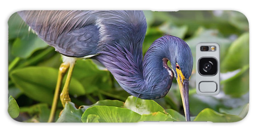 Tricolor Heron Galaxy S8 Case featuring the photograph Lily Lickin by Dennis Goodman