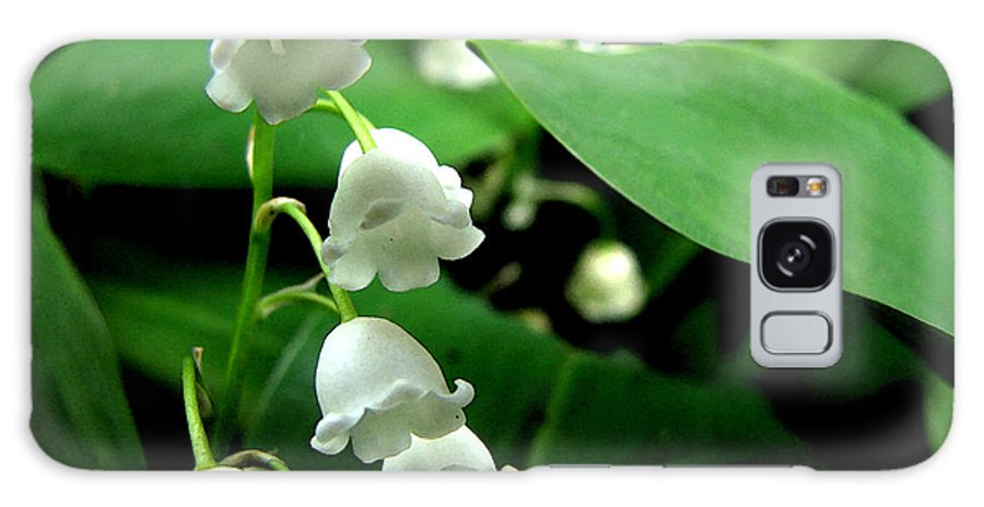 Flower Galaxy S8 Case featuring the photograph Lily Of The Valley by Michelle Calkins