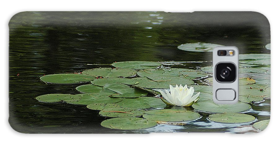 Lake Galaxy S8 Case featuring the photograph Lily Pads by Steve Cost