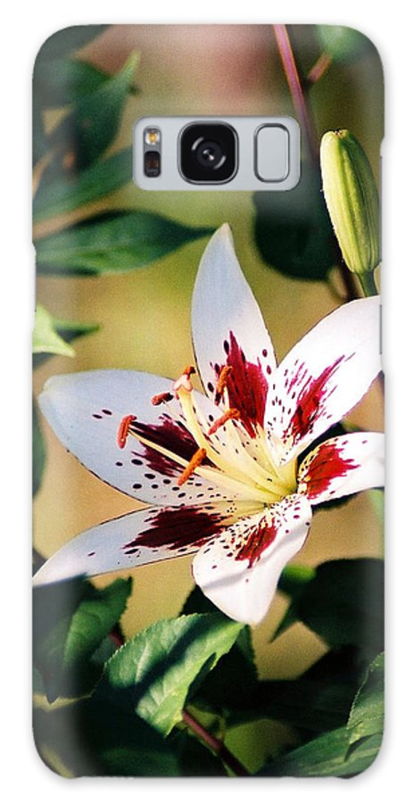 Flower Galaxy Case featuring the photograph Lily by Steve Karol