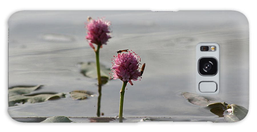 Wasp Lilypads Water Lake Plants Nature Wild Bugs Pink Flower Galaxy S8 Case featuring the photograph Lilypads And Wasps by Andrea Lawrence