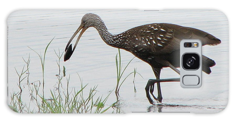 Art Galaxy S8 Case featuring the photograph Limpkin With Shellfish by T Guy Spencer