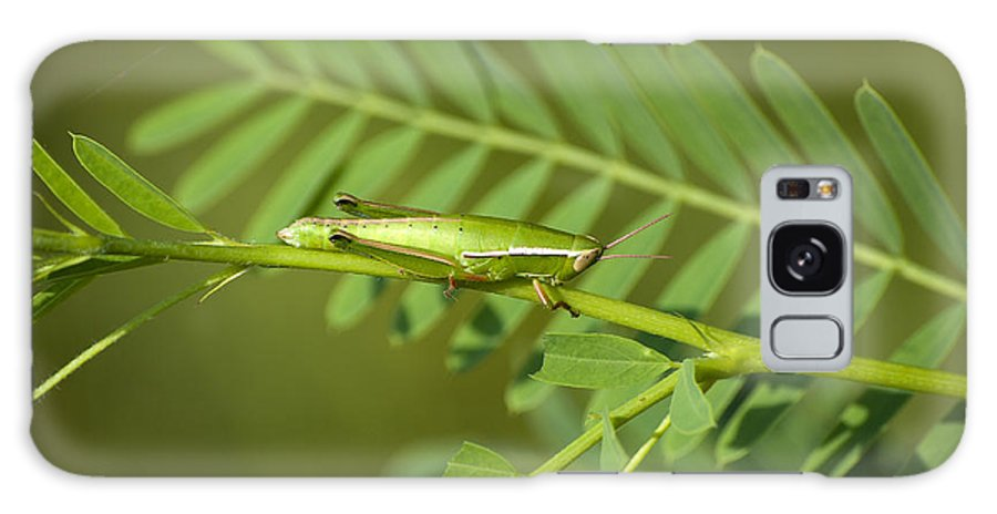 Grasshopper Galaxy S8 Case featuring the photograph Linear Winged Grasshopper by Kenneth Albin