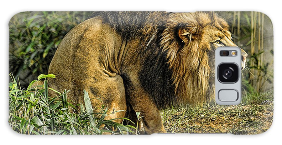 Lion Galaxy S8 Case featuring the photograph Lion Calling Females by Keith Lovejoy