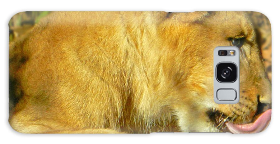Lion Cub - What A Yummy Snack Galaxy S8 Case featuring the photograph Lion Cub - What A Yummy Snack by Emmy Vickers