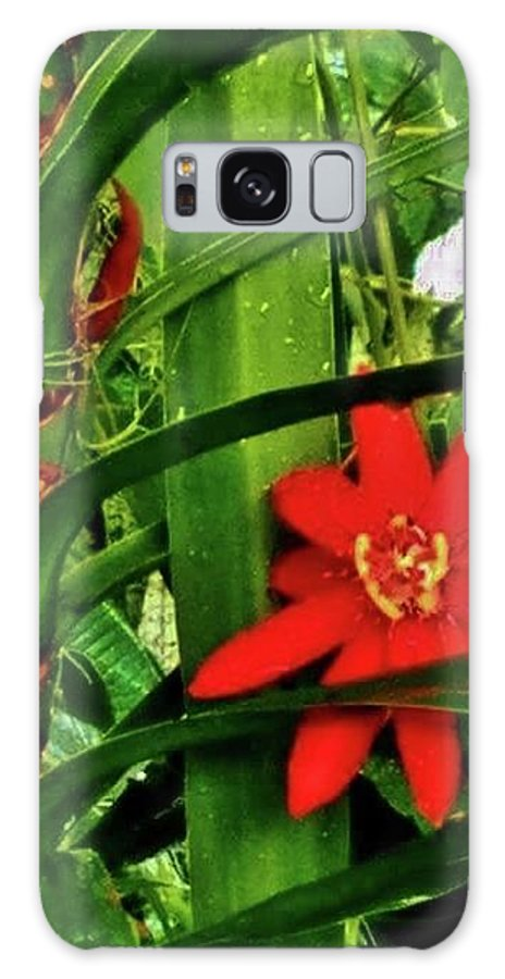 Lipstick Flower Red Florida Galaxy S8 Case featuring the photograph Lipstick Plant Flower by Janice Heinzelman