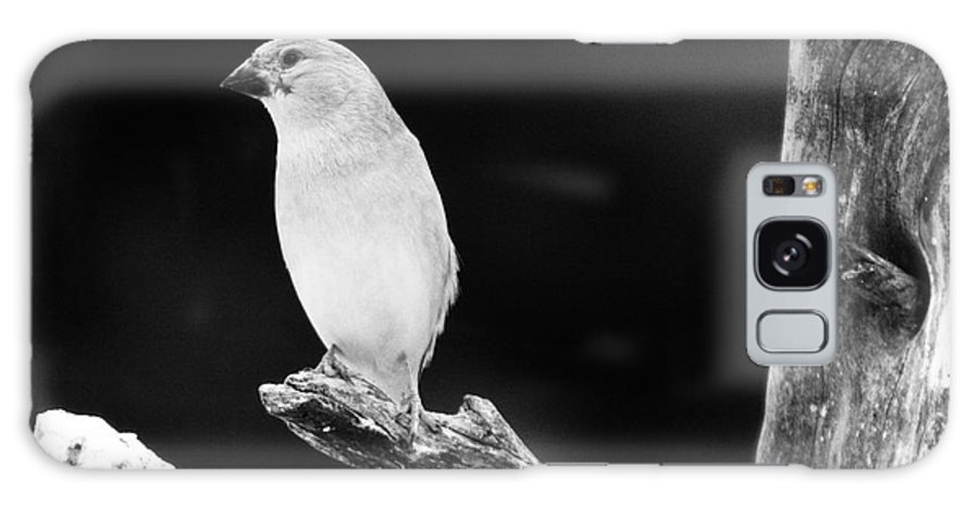 Bird Galaxy S8 Case featuring the photograph Little Bird by Angel Ciesniarska