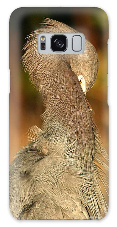 Heron Galaxy Case featuring the photograph Little Blue Heron Feeling Bashful by Max Allen