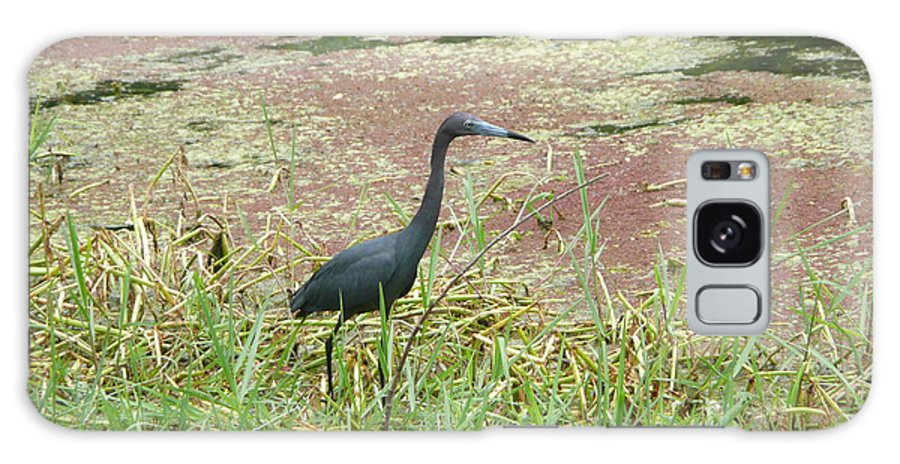 Nature Galaxy Case featuring the photograph Little Blue Heron by Kathy Schumann