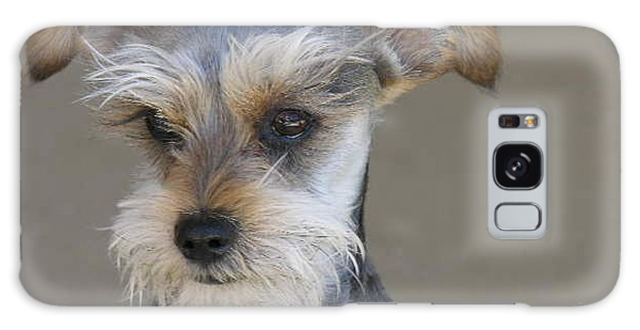 Schnausher Galaxy S8 Case featuring the photograph Little Guy by Diane Greco-Lesser
