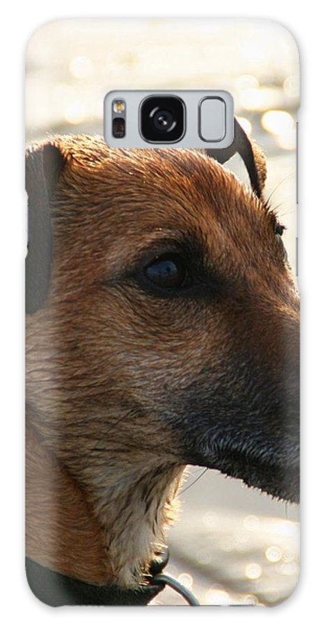 Dog Galaxy S8 Case featuring the photograph Little Joey by Martina Fagan