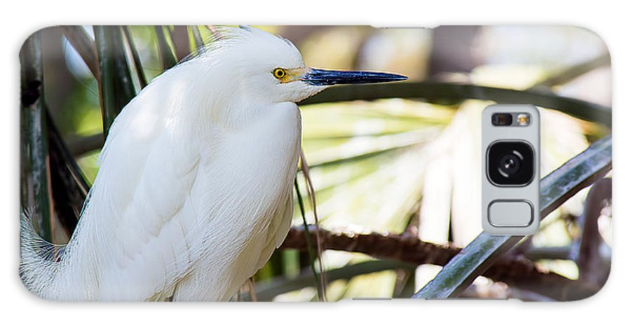 Wildlife Galaxy S8 Case featuring the photograph Little Snowy Egret by Kenneth Albin