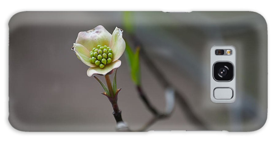Plant Galaxy S8 Case featuring the photograph Little Sprout by Trish Tritz