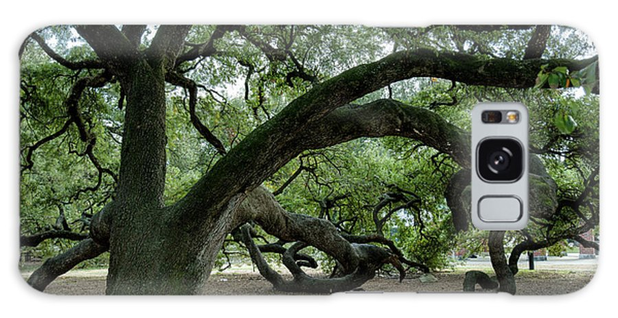 Live Oak Tree Galaxy S8 Case featuring the photograph Live Oaks by Joan Baker