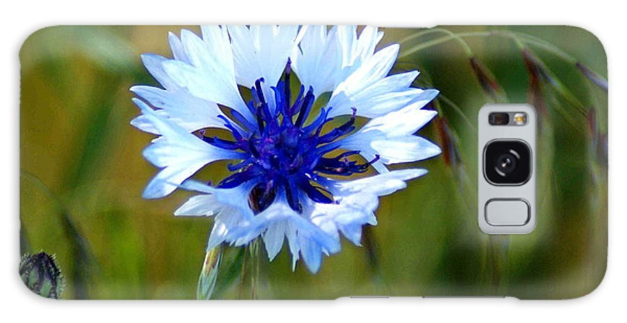 Flowers Galaxy S8 Case featuring the photograph Living In The Lawn by Ben Upham III
