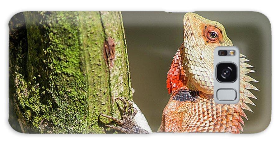 Lizard Galaxy S8 Case featuring the photograph Lizard In Maldive by Dan Balica