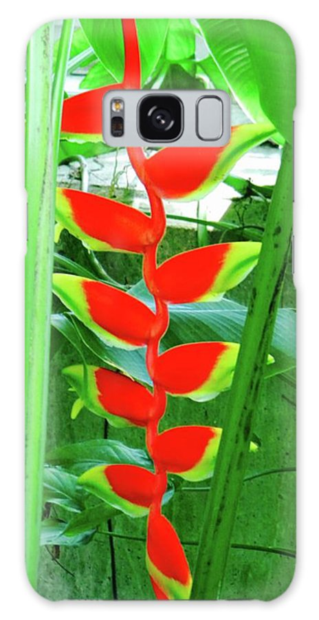 Lobester Claw Galaxy S8 Case featuring the photograph Lobster Claw Heliconia by Miguel Munoz
