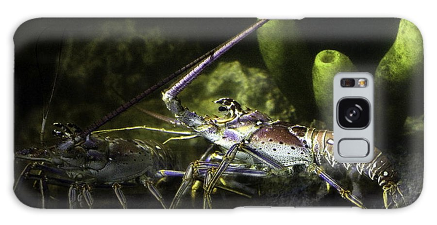 Lobster Galaxy Case featuring the photograph Lobster In Love by Marilyn Hunt